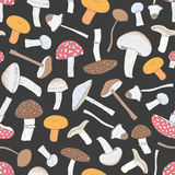 Different inedible mushrooms seamless pattern. Hand drawn fungi. Colorful vector illustration. pattern on black. Background Stock Image