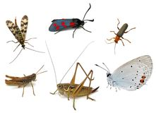 Different insects stock images