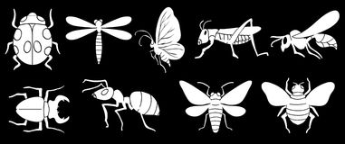 Different insects Stock Photo