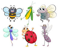 Different insects Royalty Free Stock Image