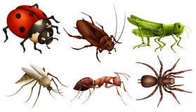 Different insects Stock Image