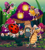 Different insects near the mushroom house Stock Image