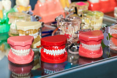 Different jaws models. Dental mold concept background Stock Image