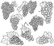Different juicy bunches of grapes Royalty Free Stock Photo