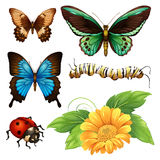 Different kind of butterflies and bugs Stock Photo