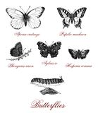 Common wildlife butterflies, vintage illustrated table. Different kind of butterfly and butterfly metamorphosis, vintage illustration Royalty Free Stock Photography