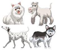 Different kind of canine. Illustration royalty free illustration