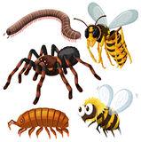 Different kind of dangerous insects royalty free illustration