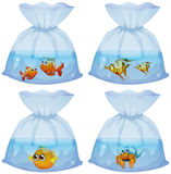 Different kind of fish in the bags Royalty Free Stock Photography