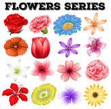 Different kind of flowers Royalty Free Stock Image