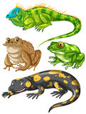 Different kind of frogs and lizards Stock Photo