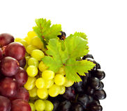 Different kind of grapes Stock Photography