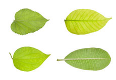 Different kind of green leaves Royalty Free Stock Images