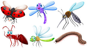 Different kind of insects Royalty Free Stock Photography