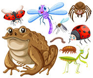 Different kind of insects stock illustration