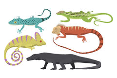 Different kind of lizard reptile isolated vector illustration. Royalty Free Stock Images