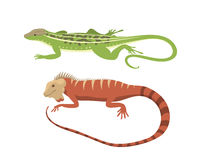 Different kind of lizard reptile  vector illustration. Stock Images
