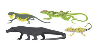 Different kind of lizard reptile  vector illustration. Stock Image