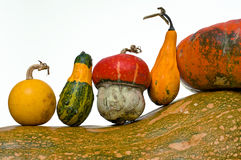 Different Kind Of Pumpkins Royalty Free Stock Photography
