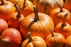 Different kind of pumpkins closeup stock image