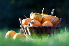 Different kind of pumpkins in garden basket royalty free stock photo