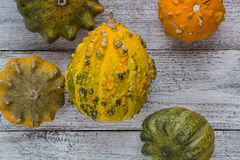 Different kind of pumpkins and winter squashes Royalty Free Stock Image