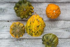 Different kind of pumpkins and winter squashes Royalty Free Stock Photography