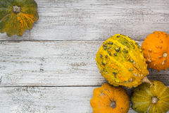 Different kind of pumpkins and winter squashes Stock Images