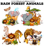 Different kind of rainforest animals Stock Photos