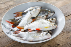 Different kind of raw fish on dish Stock Photos