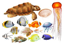 Different kind of sea animals Royalty Free Stock Photos