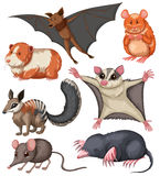 Different kind of small wildlife. Illustration Stock Photo