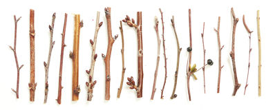 Different kind of twigs Stock Photo