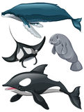 Different kind of whales and fish Royalty Free Stock Photography