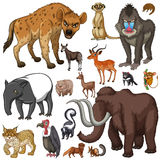Different kind of wild animals Stock Photo