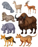 Different kind of wild animals Royalty Free Stock Photography