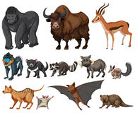 Different kind of wild animals on white Royalty Free Stock Image