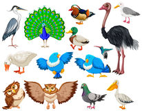Different kind of wild birds vector illustration