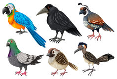 Different kind of wild birds Stock Photography