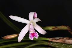 Different kind of withe orchid flower. Beautiful close up of  orchid flower Stock Images