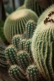 Different kinds of beautiful and impressive cacti, cactus, in a greenhouse royalty free stock photography