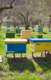 Different kinds of beehives Stock Images