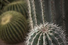 Different kinds of cacti in one place royalty free stock images