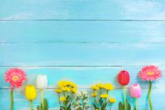 Different kinds of colorful flowers in line on blue wooden background. stock image