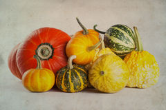 Different kinds of colorful pumpkins closeup. aged paper background Stock Photos