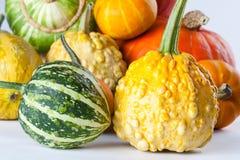 Different kinds Colorful pumpkins. Halloween pumpkins variation Royalty Free Stock Image