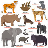 Different kinds deleted species die out rare uncommon red book animals dying wild nature characters vector illustration. Different kinds deleted species dying Royalty Free Stock Photo