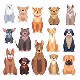 Different Kinds of Dog Breeds on White Background Stock Photos