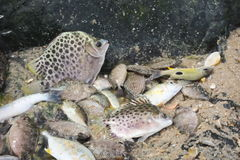 Different kinds of fish are locked together in a puddle. Stock Photos