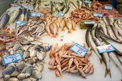 Fresh fish at a market Stock Image